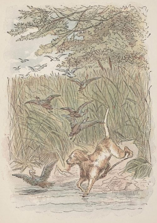 The Ugly Duckling Fairy Tale by Hans Christian Andersen - Sporting dogs bounded in among the rushes