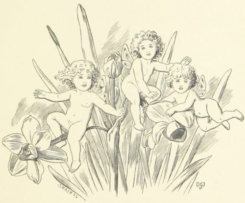 Fairies and Jonquils Illustration by E. Gertrude Thomson