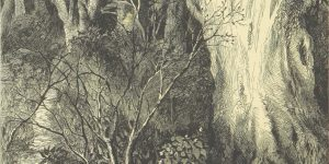 Adelaide Anne Procter In the Wood Poem