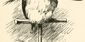 The Lang Coortin Poem - The popinjay Illustration by Arthur B. Frost